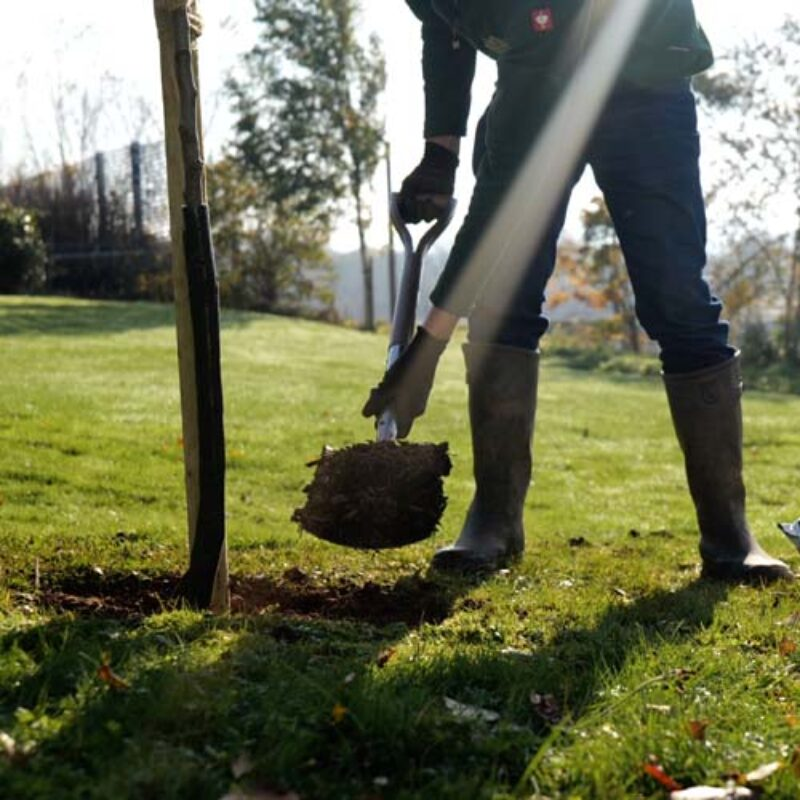 Plant your trees in the autumn for better establishment 1
