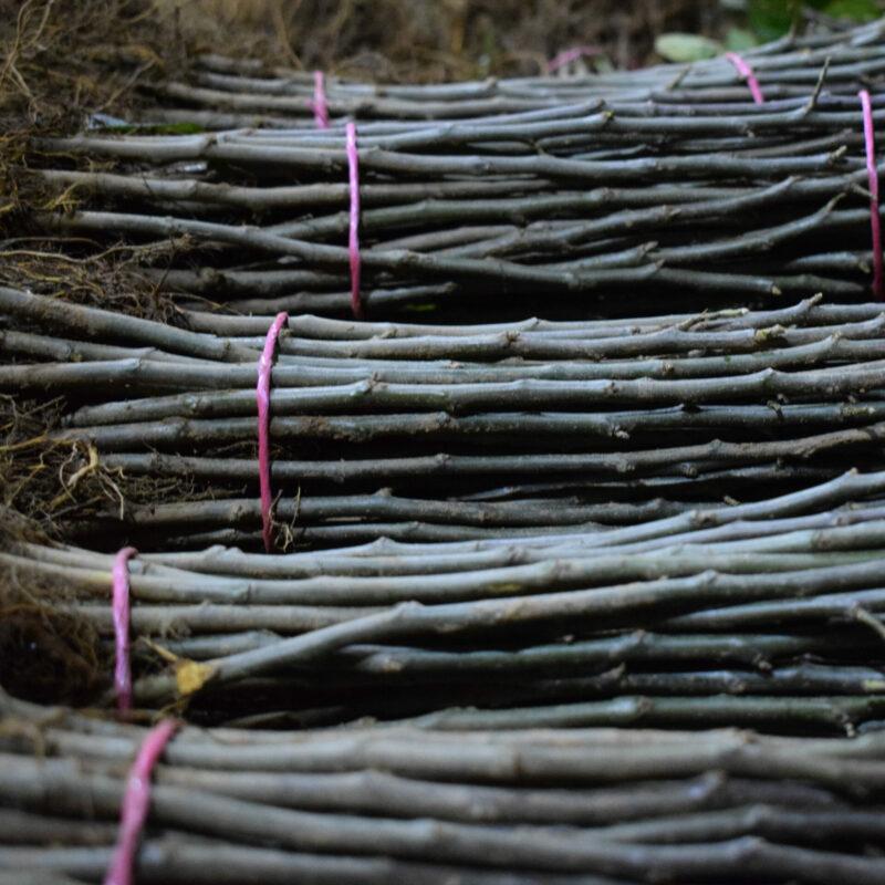 Rootstocks for Fruit 2