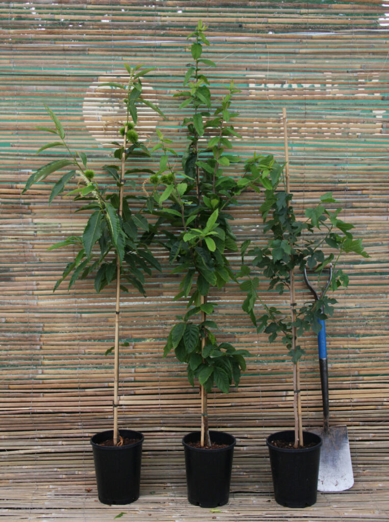 7L Fruit Container Tree