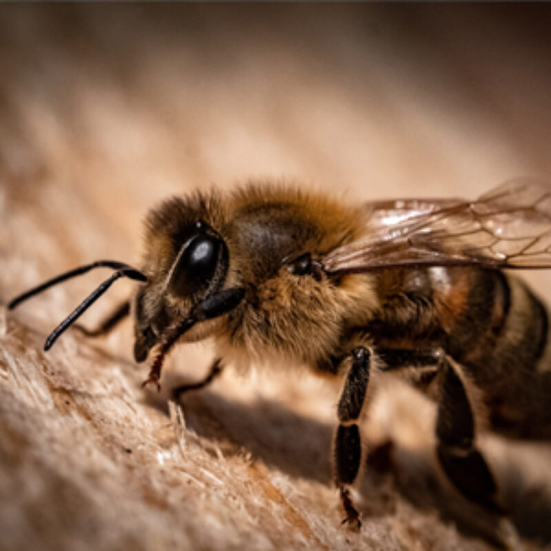 How Trees Benefit Bees