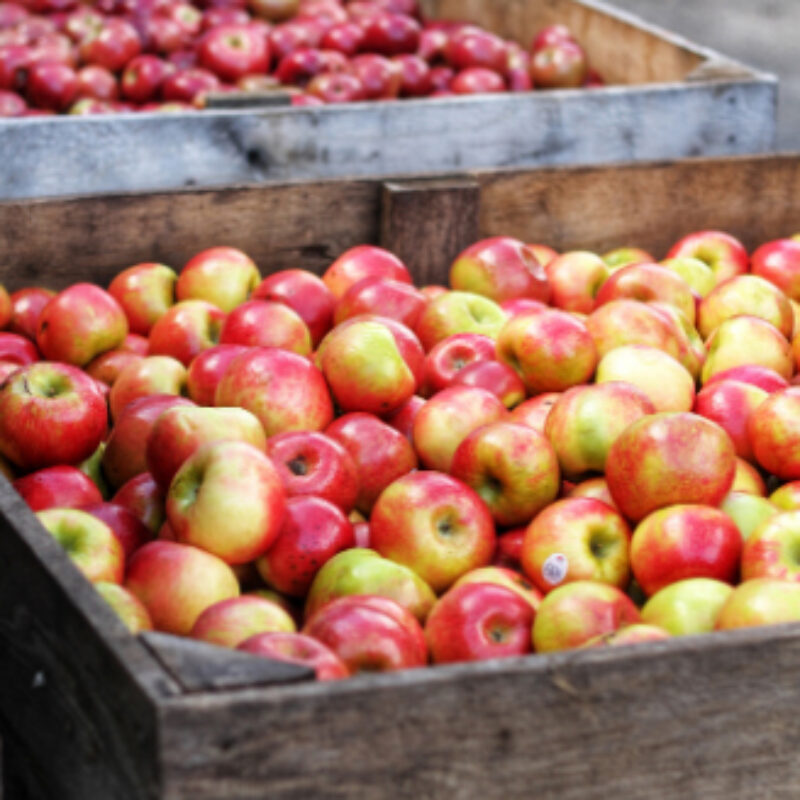 Harvesting and storing fruit