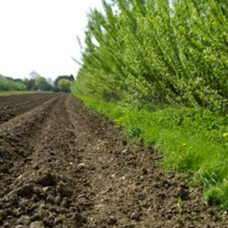 Agroforestry Projects