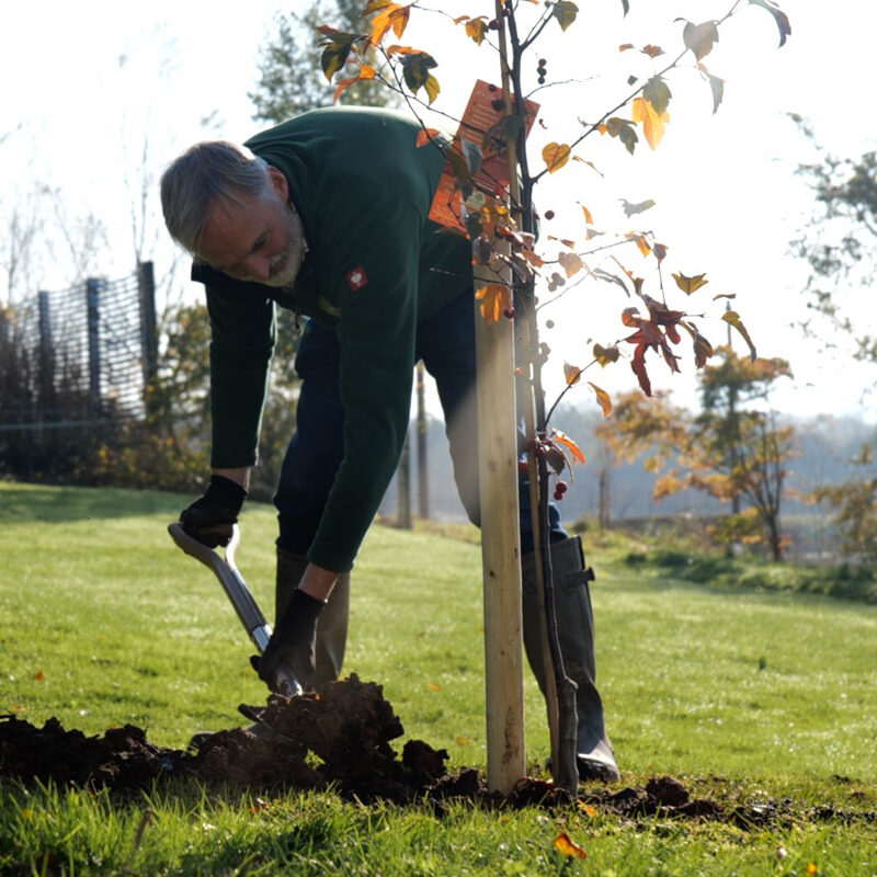 How to Plant a Container Tree