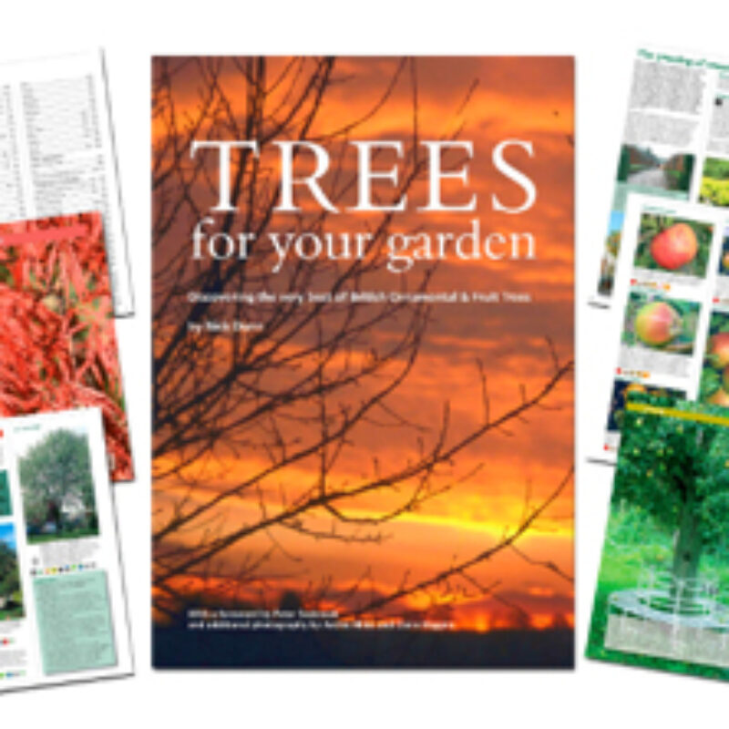 FREE tree reference book for National Tree Week