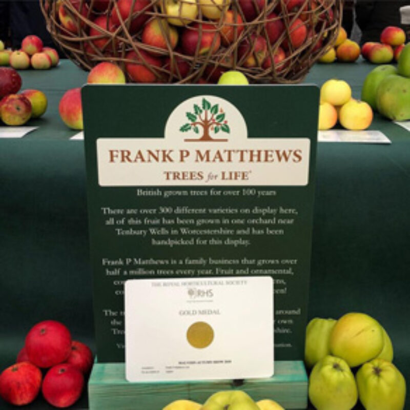 Gold Medal for Frank P Matthews at RHS Autumn Show
