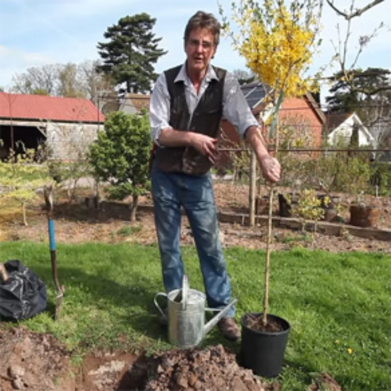 Short video on how to plant a tree