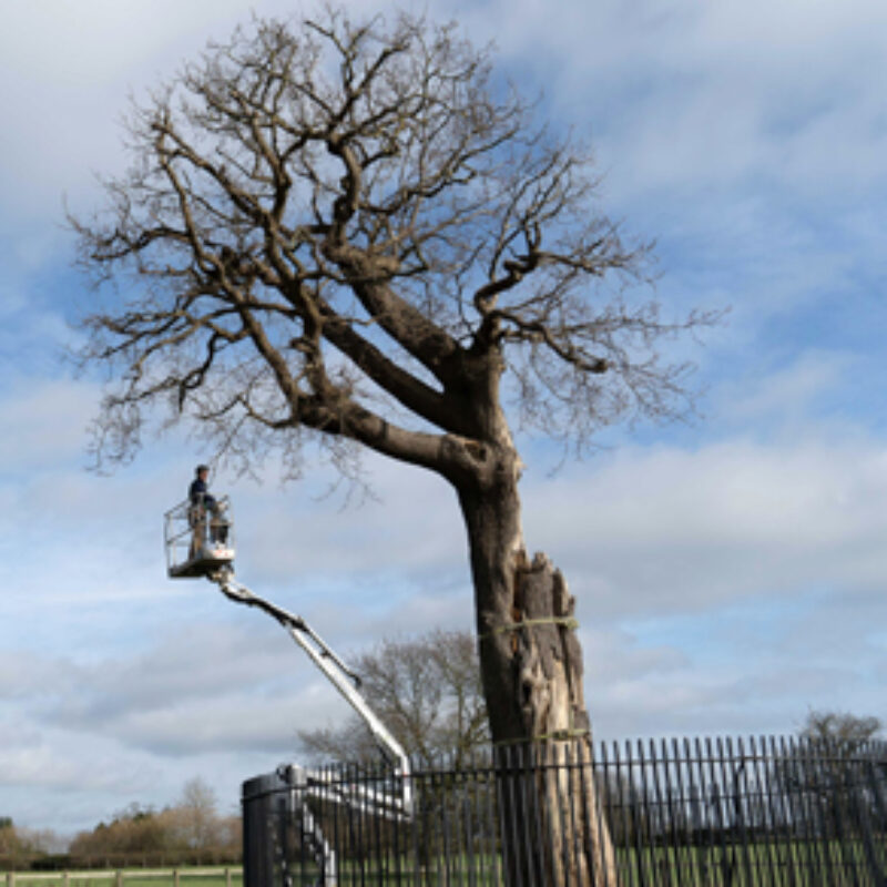 Nick Dunn from Frank P Matthews helps save Royal Oak