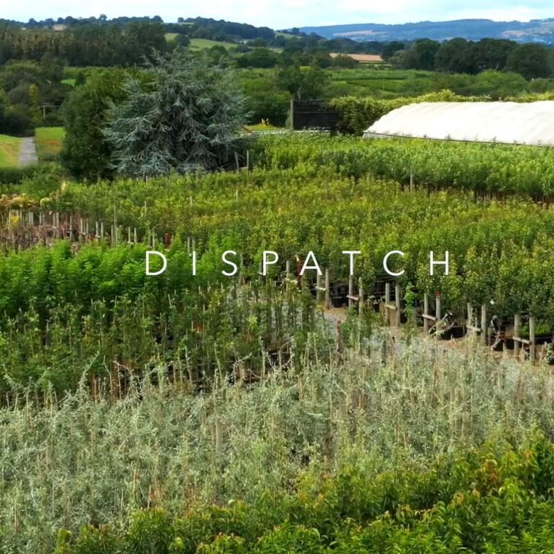 Dispatch 2019 at Frank P Matthews