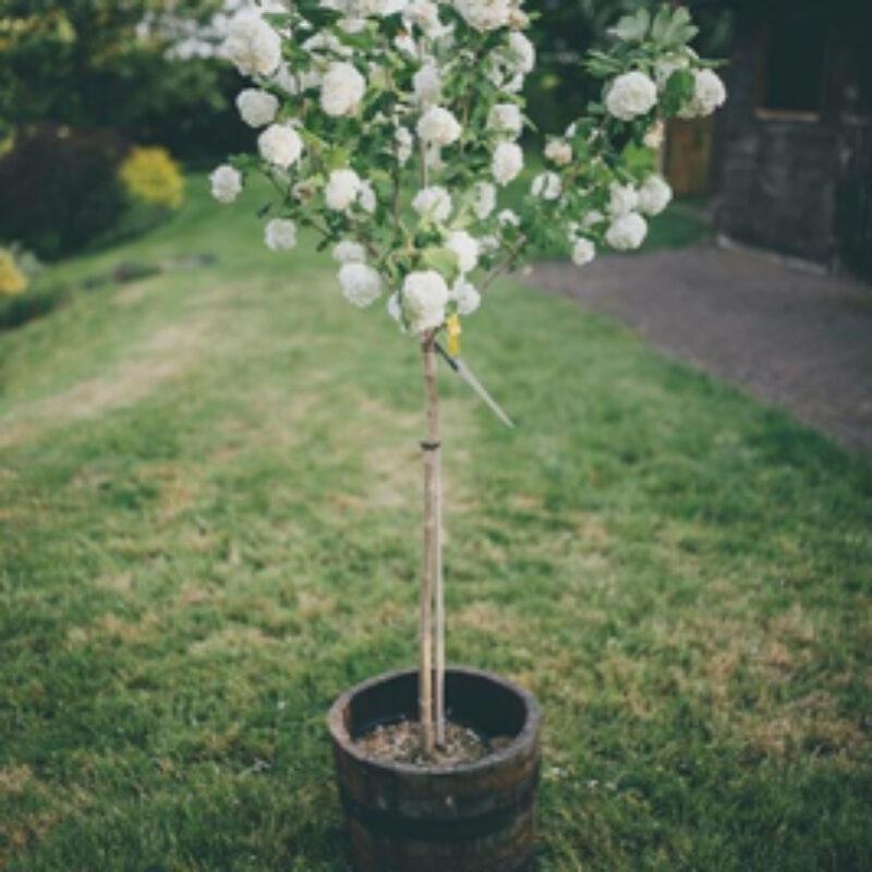 Keeping Trees in Pots