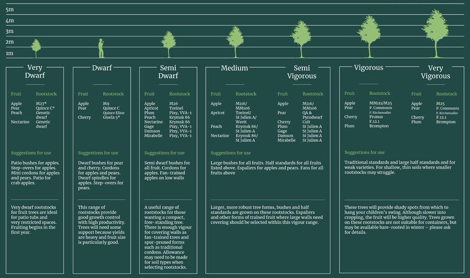 Rootstocks Chart