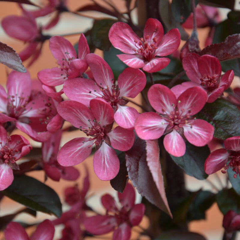 NEW Varieties Win at HTA National Plant Show 2017 3