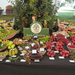 Frank P Matthews Win RHS Award for Fruit Exhibit